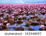 Lotus Field Lake Large In Udon...
