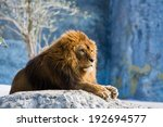 Lion Lying At The Rock