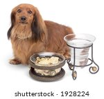 Dog with bowls - stock photo