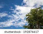 Blue Sky With Clouds And Tree...