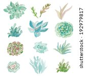 Watercolor Succulent Vector....
