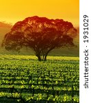 sunrise over large tree in... | Shutterstock . vector #1931029