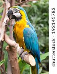 macaw in victoria butterfly... | Shutterstock . vector #193145783