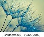 Abstract Macro Photo Of Plant...
