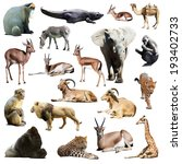 set of african animals.... | Shutterstock . vector #193402733