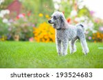 Little Dog On Tne Grass