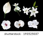 illustration with white flowers ... | Shutterstock .eps vector #193525037