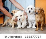 group of four dogs sitting on