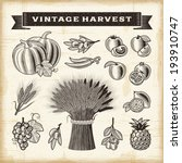 vintage harvest set. fully... | Shutterstock .eps vector #193910747