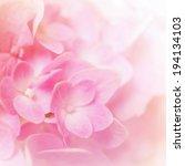 vivid color hydrangea in blur... | Shutterstock . vector #194134103