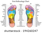 acupressure,aesthetic,alternative,beauty,body,care,chart,color,concept,describe,description,ear,eye,foot,head