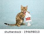 Valentine Theme Bengal Kitten...