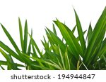 bamboo leaves isolated on white. | Shutterstock . vector #194944847