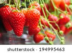 Fresh Strawberry From Farm