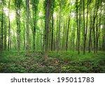 panorama of a green summer...   Shutterstock . vector #195011783