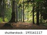 Transylvanian Woodland