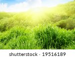 spring green grass and trees | Shutterstock . vector #19516189