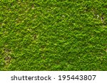 Green Moss On Wall Texture
