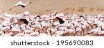 flamingo bird in flight at... | Shutterstock . vector #195690083