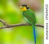Beautifu Bird  Long Tailed...