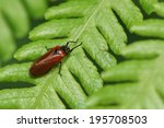 froghopper | Shutterstock . vector #195708503