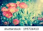 Stock photo red poppies in sun beams on the meadow selective focus aged photo retro style postcard 195726413