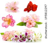 Stock photo collage of alstroemeria flowers isolated on white 195812297