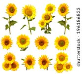 sunflowers collection on the... | Shutterstock . vector #196186823