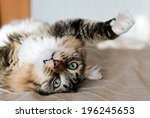 Stock photo grey cat lying on bed 196245653