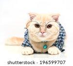 scottish fold cat | Shutterstock . vector #196599707