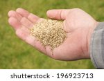Hand Holding Grass Seed Agains...