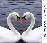 swans heart | Shutterstock . vector #1969592