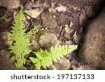 A Small Fern Growing Between...