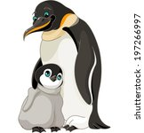 an adult emperor penguin with...