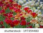 beauty in nature   Shutterstock . vector #197354483