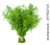 Dill Herb Closeup Isolated On...