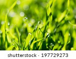 dew on the grass in nature | Shutterstock . vector #197729273