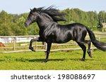 Black Andalusian Horse Runs Trot