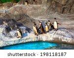 Cute Humboldt Penguins ...
