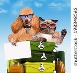 Stock photo dog traveler 198348563