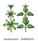 types and leaf shape. botany | Shutterstock . vector #198460547