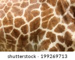 Genuine Leather Skin Of Giraff...