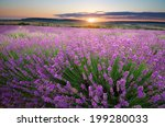 meadow of lavender. nature... | Shutterstock . vector #199280033