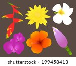 colorful tropical flowers set | Shutterstock .eps vector #199458413