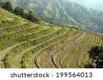 terraces  | Shutterstock . vector #199564013