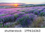 meadow of lavender. nature... | Shutterstock . vector #199616363