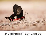 butterfly on the ground | Shutterstock . vector #199650593