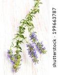 healing plants  hyssop
