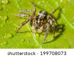 jumping spider on a green... | Shutterstock . vector #199708073