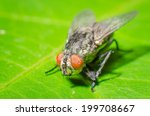 fly on a green leaves | Shutterstock . vector #199708667
